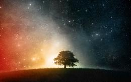 Tree Shadow on Starry Sky1920x1200Full HD 16 10Wallpaper 144