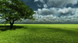 Green Land Tree shadow wallpaper 269