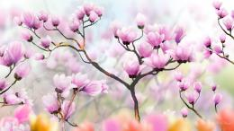 Download Tulip Tree Shadows wallpaper 1466