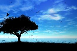 Birds sky tree shadow sea mood bokeh wallpaper | 1920x1280 | 112686 1608