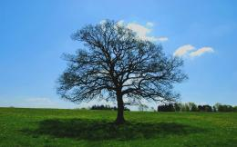 Bare Tree Meadow Shadow Sky wallpapers | Bare Tree Meadow Shadow Sky 1251