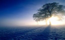 Snow Tree Sun & Shadow wallpapers | Snow Tree Sun & Shadow stock 1119