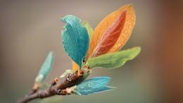 Vintage Colorful Leaves Hd Wallpaper | Wallpaper List 1877