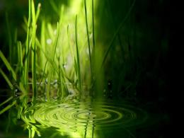 Water Plants Wallpapers4845 201