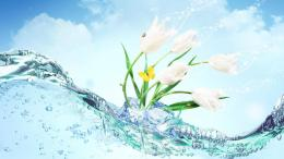 Flower Water Wallpaper #19616 Wallpaper | High Resolution Wallarthd 475