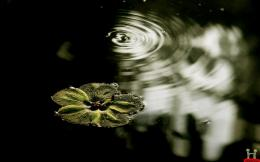 Water Flower Natural HD Wallpaper | E Entertainment 1433