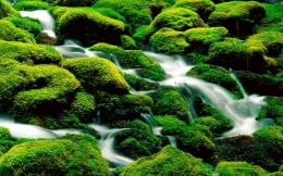Incredible green waterfall nature wallpaper 1680x1050 resolution 1890