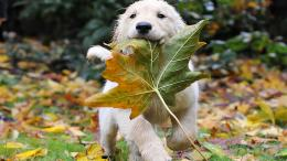 white puppy wallpaper 1366x768Download4sharedVignesh Vicky 1638