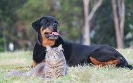 Cat Dog Rottweiler Animal Animals 1920x1200 hdw eweb4 com 813