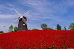 Red Flowers Field Windmill HD WallpapersNew HD Wallpapers 1590