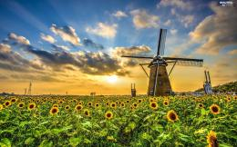 Windmill, Field, Nice sunflowersBeautiful views wallpapers 1062