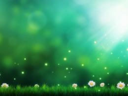 download green fields sparkling wallpaper in flowers plants wallpapers 297
