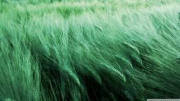 Grass In The Wind Wallpaper 1920x1080 Grass, In, The, Wind 1473