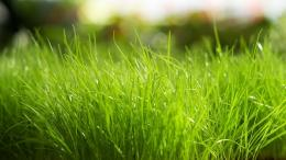 home green grass wind grass wallpaper 1542