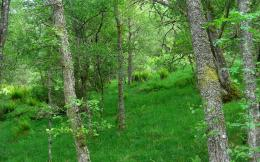 trees forests grass Scotland HDR photography wallpaper background 1615
