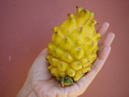 Yellow Dragon Fruits Wallpapers, Cheap Yellow Dragon Fruits, Yellow 1240
