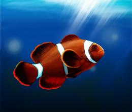 Cute Clown Fish Wallpapers For AndroidFish, Android, Clown Fish 1801