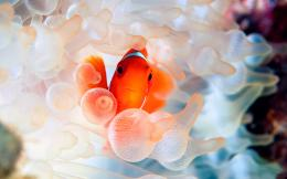 Clown Fish Face Wallpaper IPhone #1599 Wallpaper | Wallpaper Screen 885