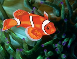 Clown Fish Desktop Wallpaper HDFish, Wallpaper, Clown Fish, Clown 130
