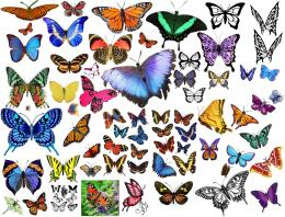 Butterfly clipart collage by CsThRuH2O on DeviantArt 1134