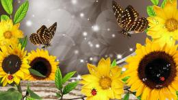 Sunflowers And Butterflies Collage Hd Wallpaper | Wallpaper List 620