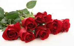 red roses 698