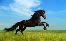 Black Stallion Wallpaper for Pinterest 1391