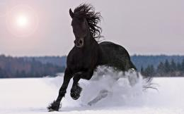 Stallion Wallpapers 855