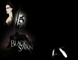 Black Swan WallpaperBlack Swan Photo19953129Fanpop 1699