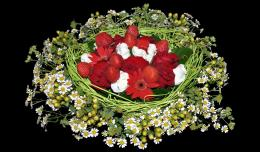 Wallpaper black, background, daisies, roses, strawberries, bouquets 1226