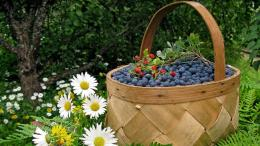 Download Wallpaper basket, berry, bilberry, wild strawberry, camomiles 1124