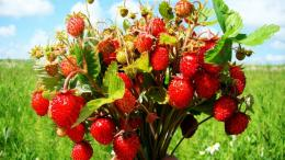 Bouquet of wild strawberries wallpaper in Flowersplants wallpapers 944