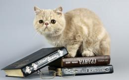 Cat sitting on the books Widescreen Wallpaper#21864 605