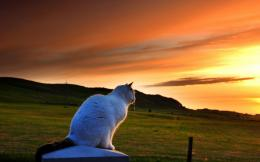 Kitty Sitting On The Fence In Sunset Hd Wallpaper | Wallpaper List 1281