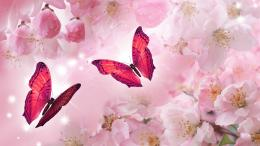 cherry blossoms hd wallpaper dowload cherry blossoms image dowload 767