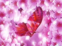 Spring Sakura Surpise Butterfly Cherry Blossom Wallpapers 913