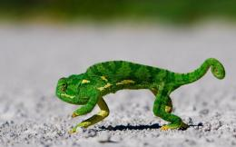 Cute Sneaky Chameleon wallpaper 124