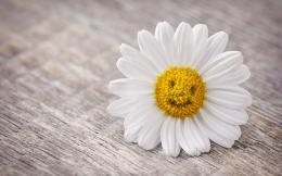 بطاقة بريديةmood flower daisy smile hd wallpaper 577