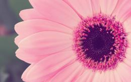 18+ Daisy Backgrounds, Wallpapers, Images | FreeCreatives 996