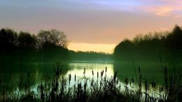 Early Morning Lake Scenery Mist Reeds TreesHigh Definition 375