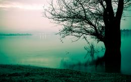 Early Morning Fog Lake And Tree Wallpapers1920x12002172434 1180