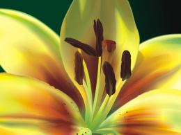 pistil and stamen wallpapers Flowers | Flowerjpg ru 847