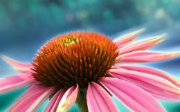 Beautiful macro pistil of a pink flowerHD wallpaper 1787