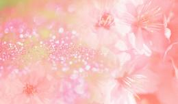 Pics PhotosFlower Art Pistil Pink 1 Wallpaper 329