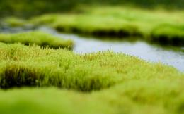 Wallpaper grass, water, white, green 1302