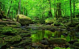 Grass Green Forest Water Rocks wallpapers | Grass Green Forest Water 1285