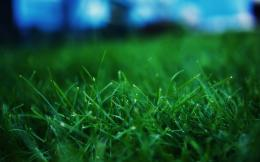 Grass WallpaperGreen Wallpaper19784909Fanpop 745