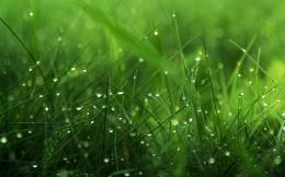 Grass Blades HD Wallpaper | Theme BinCustomization, HD Wallpapers 1088