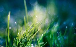 Water drops on grass wallpaper #16806 1895