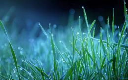 season grass on water drops wallpaper winter season grass on water 1100